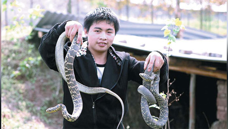 venomous snake farming in china