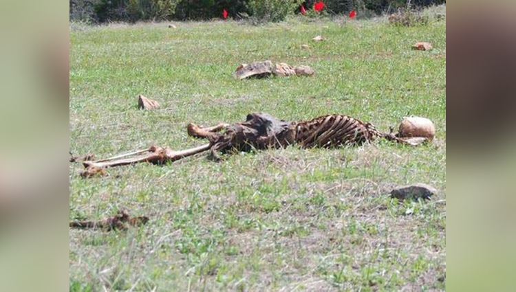 here dead body are thrown in open ground