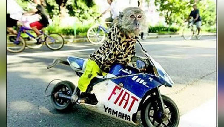 monkey riding bike in dhoom style