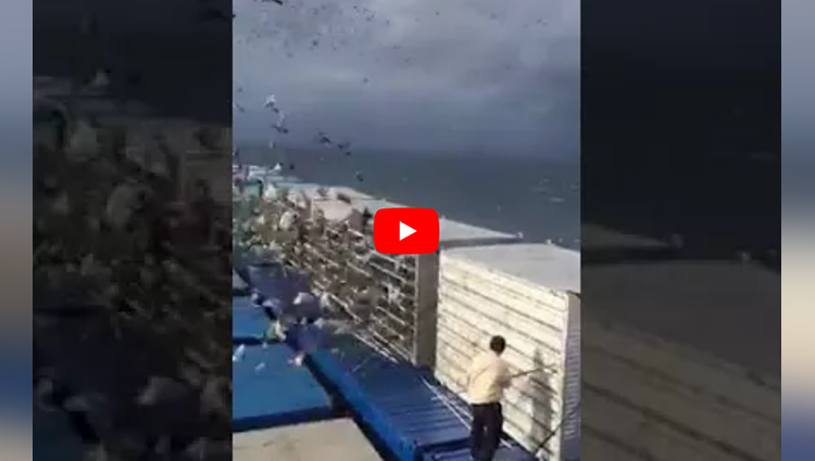 releasing thousands of birds from cage