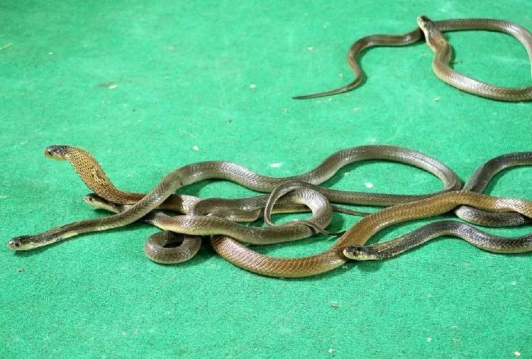 maharashtra snake village