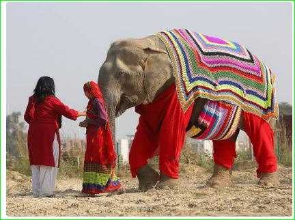 Mathura villagers provide woollen jumpers to elephant