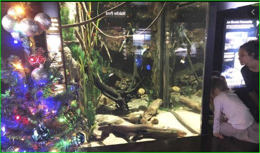 Electric eel lights up Christmas tree in aquarium