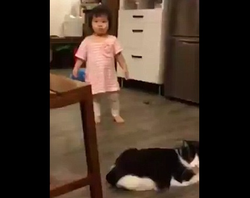 Cat trips baby girl