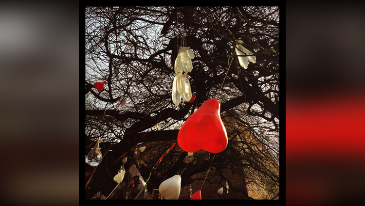 Hanging Condoms Worshiping the Tree is Valentine's day