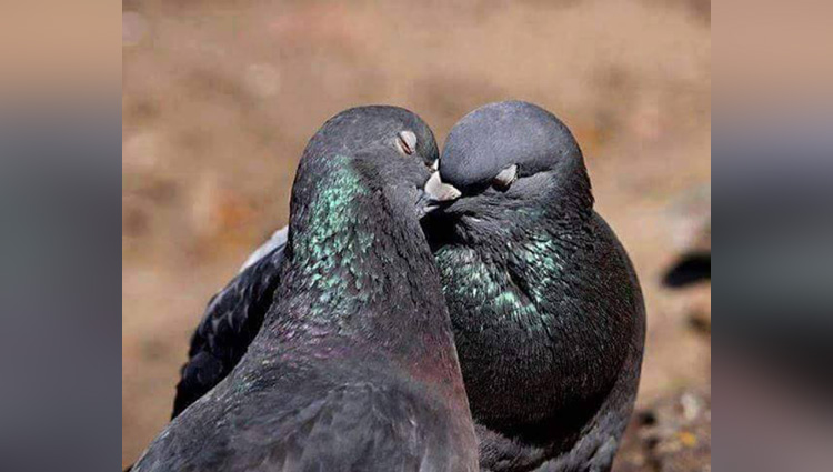 birds couple