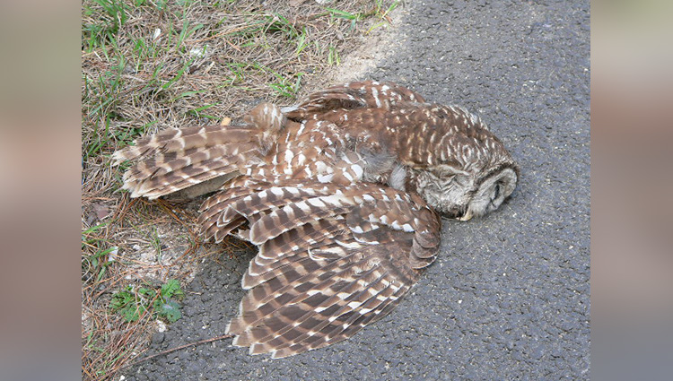 Bihar People Perform Last Rites On A Owl Death In Village