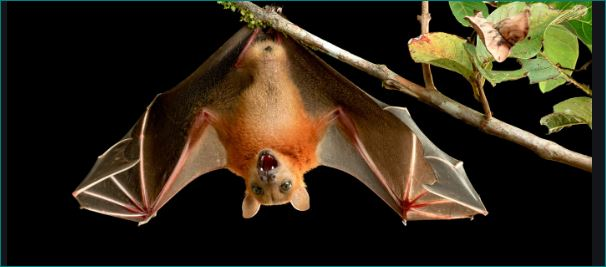 Why Do Bats Hang Upside Down