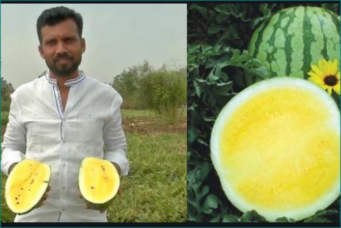 karnataka man grew yellow watermelon scientifically