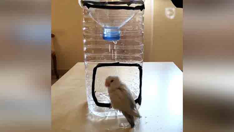 how to make a bird shower at home