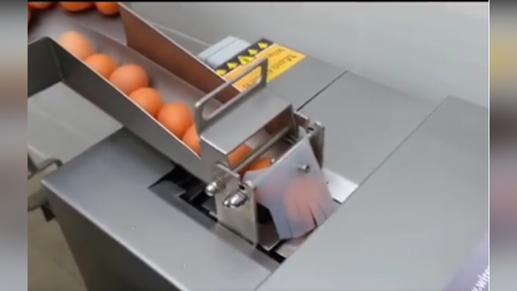 this machine separate eggs video viral