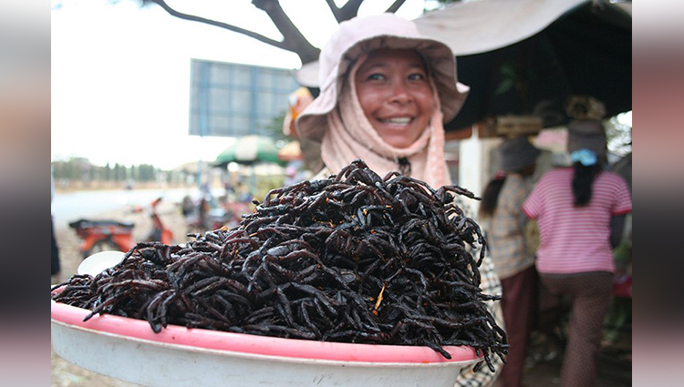 Bugs As Food Around The World