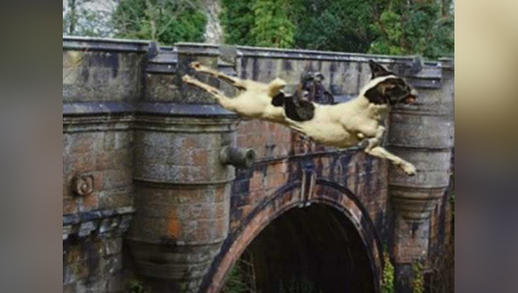 dogs jump from this haunted suicide bridge