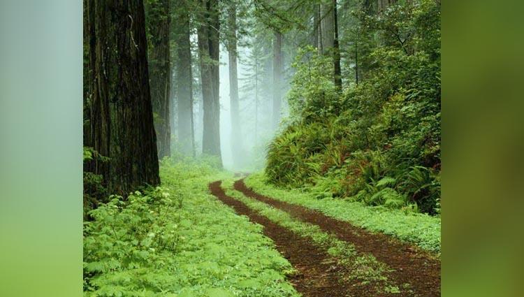Get More Close to Nature through Kerala's