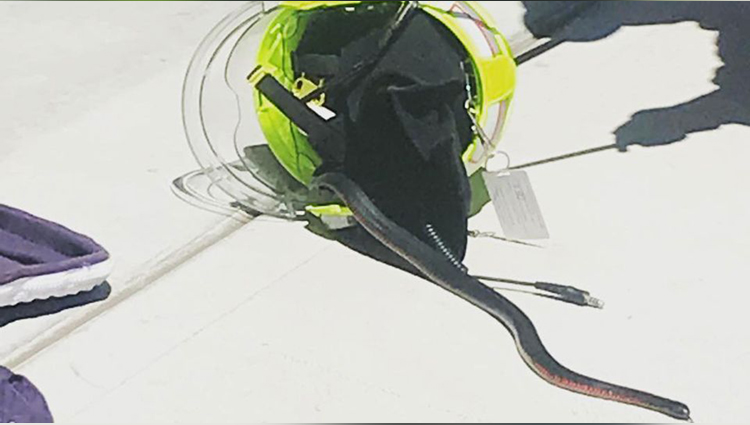 Australian Firefighter Finds Venomous Snake Hiding Inside Helmet