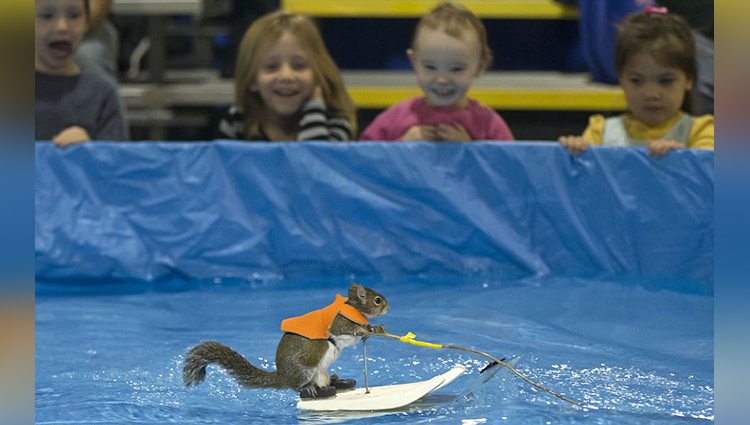 Water-skiing squirrel named Twiggy at Toronto boat show