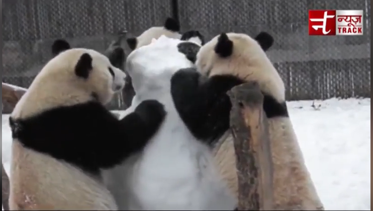 cute panda funny talks