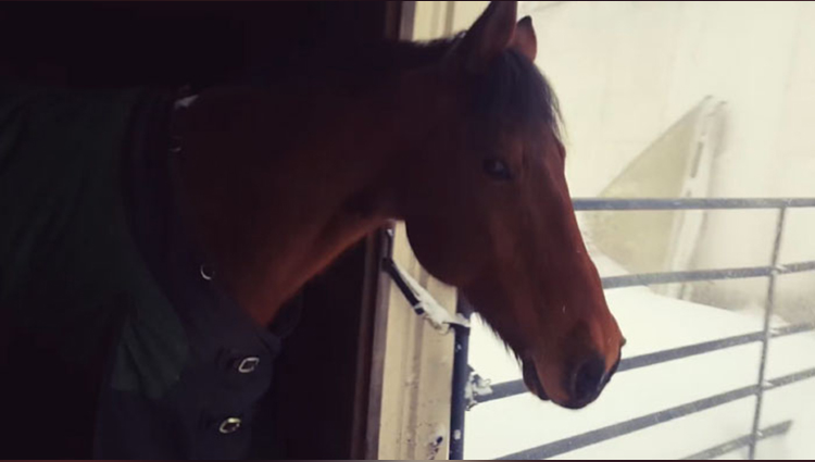 Horses' Reaction After Their Owner Let Them Out In The Snow