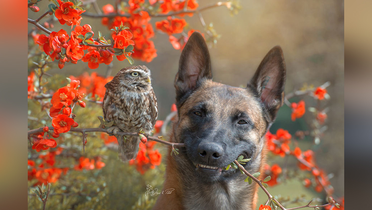 Ingo The Dog And His Owl Friends