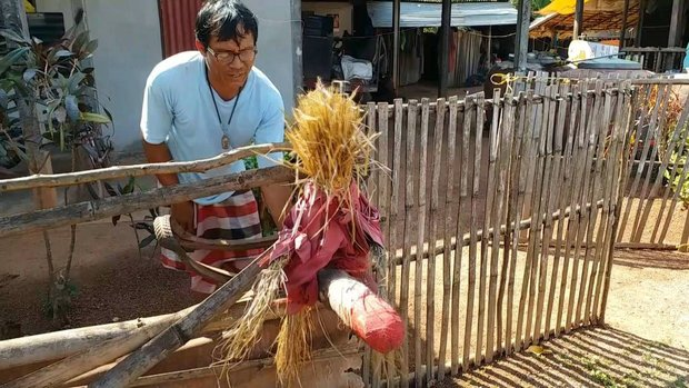 Terrified Thai women hang scarecrows with huge TODGERS outside