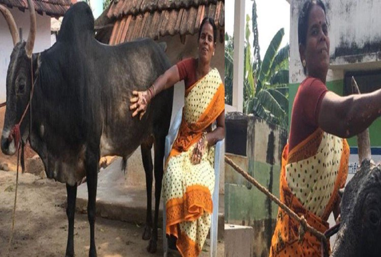 woman did not marry because of bull