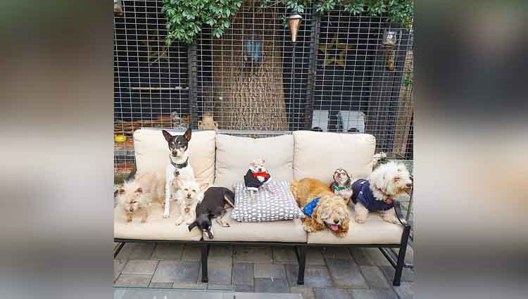 10 Dogs 1 Pig 6 Birds 1 Rabbit 2 Cats and 1 Human happy family