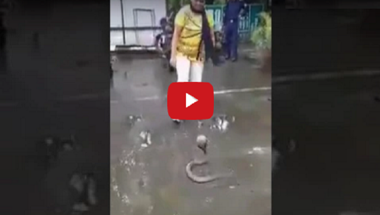 Brave Girl In India Girl catch Snake in india