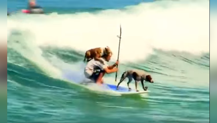 Surfing With Dogs Thats Really Cool