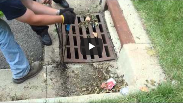Saving Ducklings from certain death in the sewers