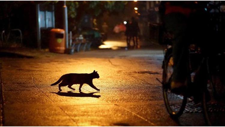 Auspicious Superstition around the world