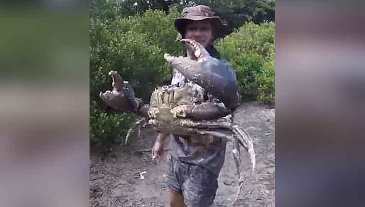 Man Captures Huge Crab in Queensland Australia