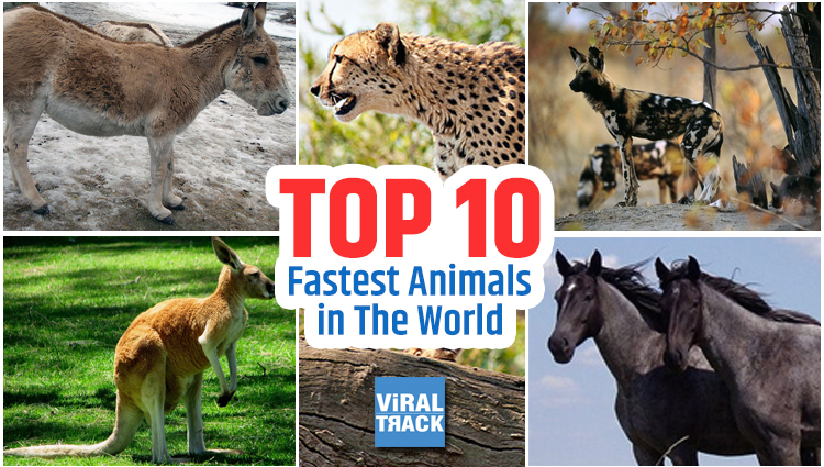 Top 10 fastest animals