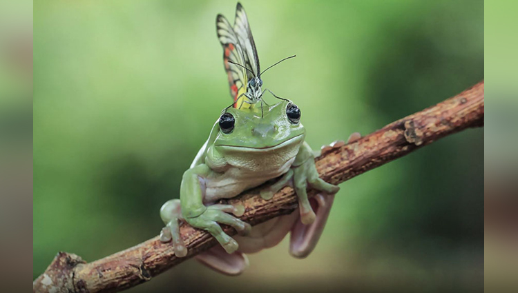 tanto yensen photography of frog