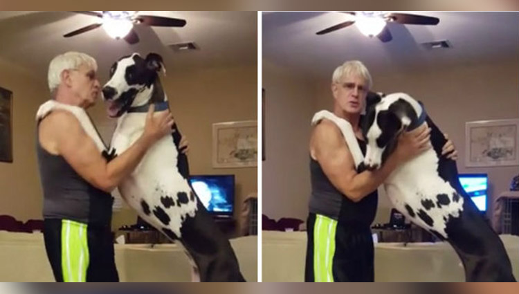Huge Great Dane dances with owner