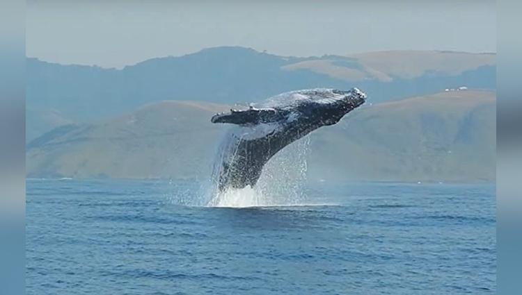 See The Video Of A Huge Whale Playing In The Water