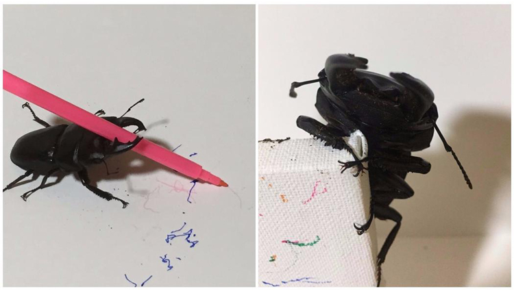 Meet Spike the Stag Beetle artist muse and star of Twitter