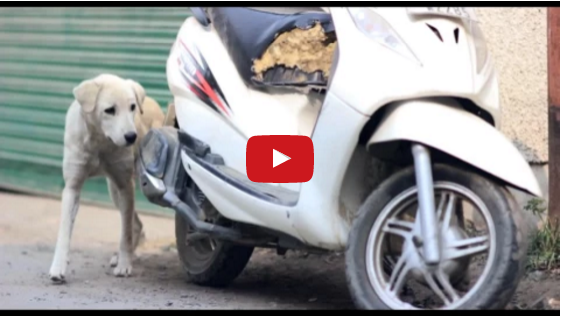 dogs love story made by imtiaz ali