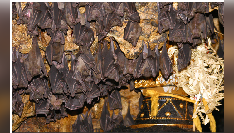 Village In Bihar That Worships Bats