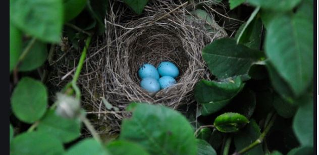 Bird eggs VIBRATE to communicate to each other