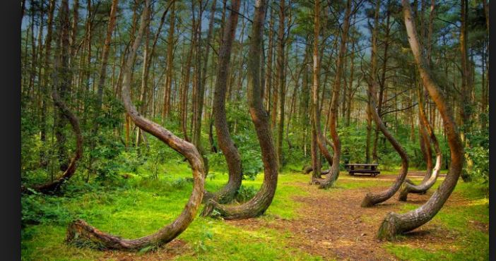Hoia Baciu Transylvania Haunted Forest The Bermuda Triangle Of Romania Mysterious Forest