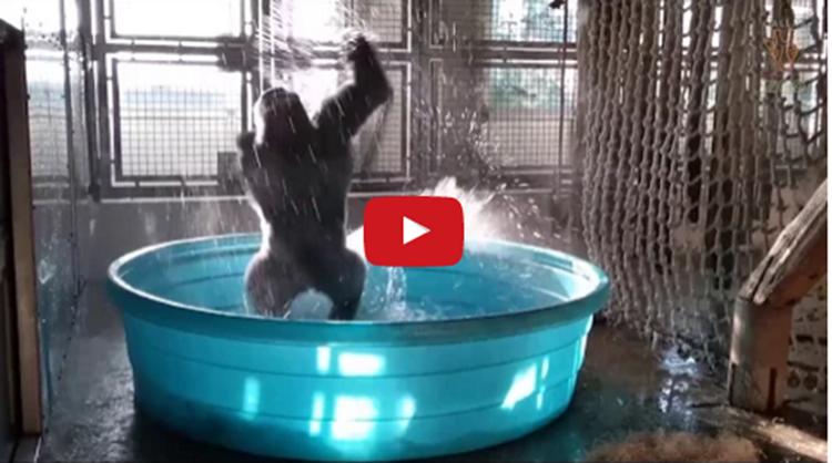 gorilla viral break dance