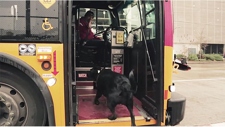 this smart dog takes the bus all by herself every day to go to the park