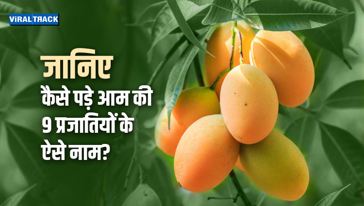 story behind the name of indian mangoes