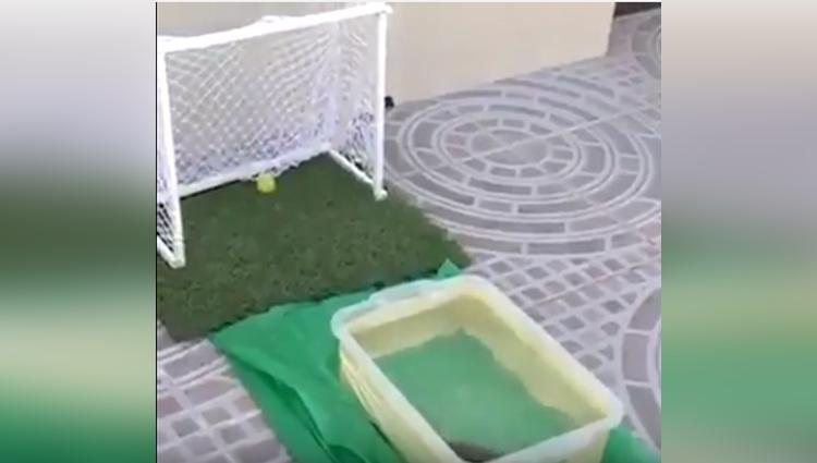 amazing fish playing football