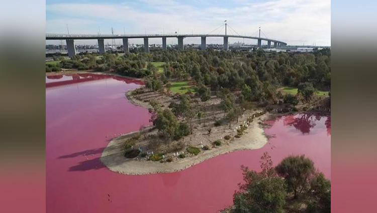 australian lake turns pink in incredible natural phenomenon
