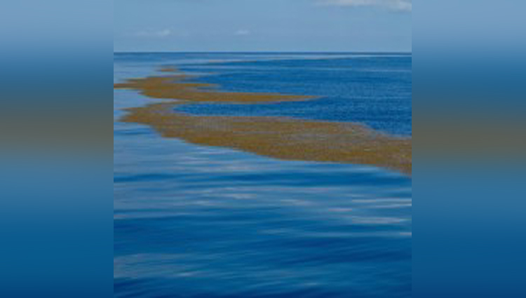 Mystery of Sargasso Sea - Sea Without Shores or Coastline