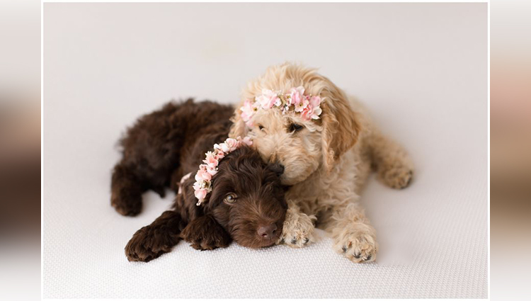 Puppy Newborn Pictures