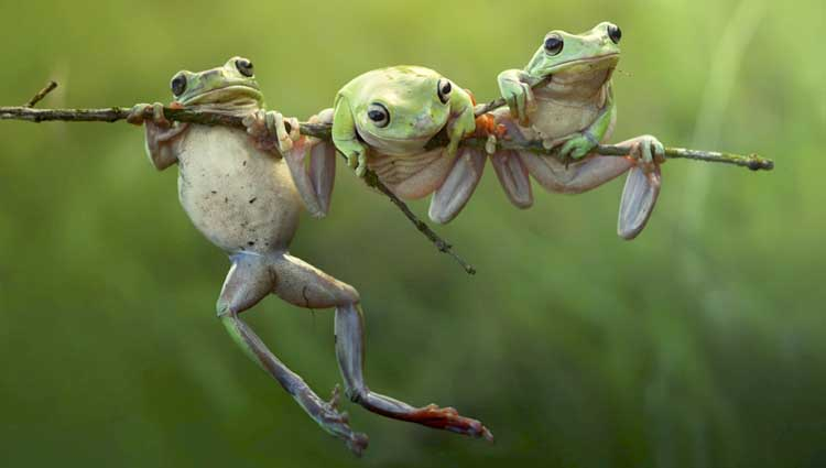Cute Frog Art Print by Photos hd pictures Cute Frog rain photos