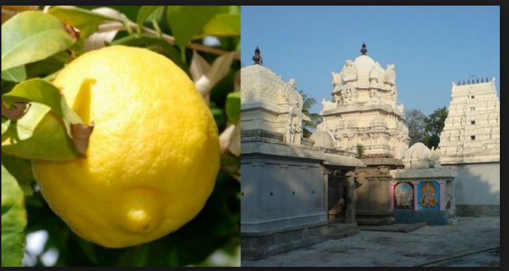 A sacred Lemon Just Got Auctioned For Rs 39000 In A Tamil Nadu