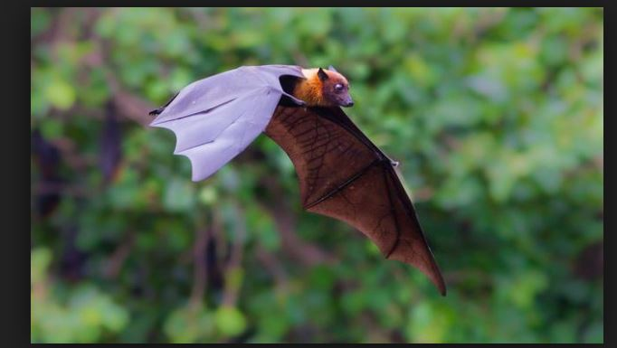 Incredible Bat Facts